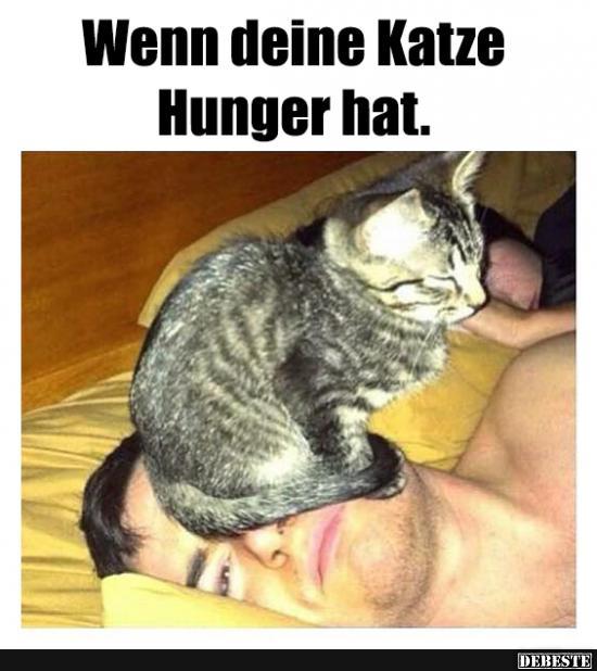 Wenn Deine Katze Hunger Hat Lustige Bilder Spruche Witze Echt