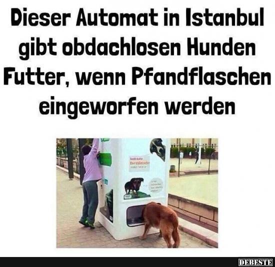 Dieser Automat in Istanbul gibt obdachlosen Hunden Futter