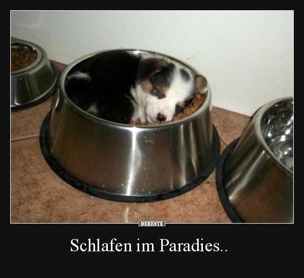 Schlafen Im Paradies Lustige Bilder Spruche Witze Echt Lustig