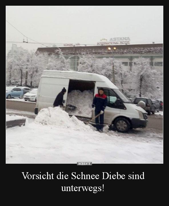 Schnee Lustige Bilder.Vorsicht Die Schnee Diebe Sind Unterwegs Lustige Bilder
