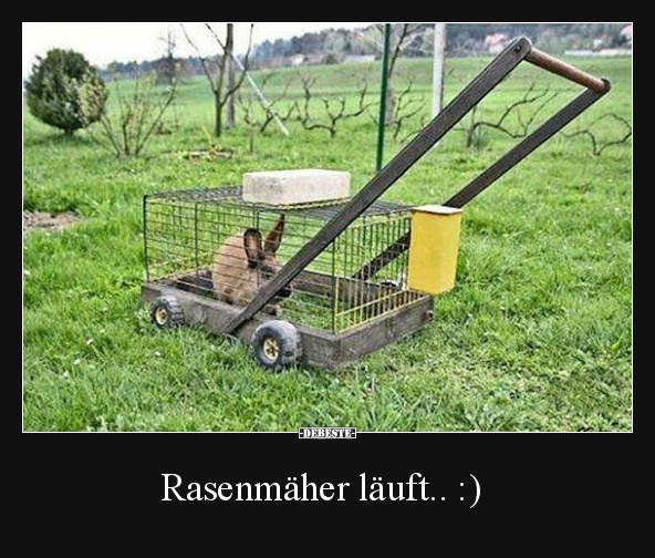 Rasenmaher Lauft Lustige Bilder Spruche Witze Echt Lustig