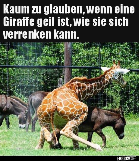 34 Lustige Bilder Von Giraffe In 2019 Lustig Neue Debeste