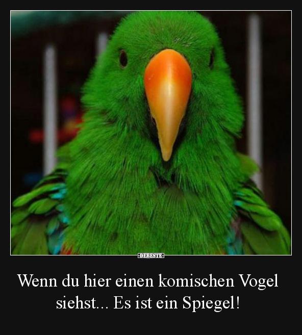 Vögel Lustig