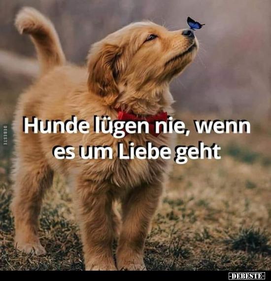 Hunde Lügen Nie Wenn Es Um Liebe Geht Lustige Bilder