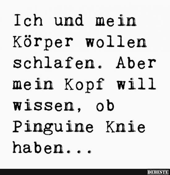 pinguine haben knie