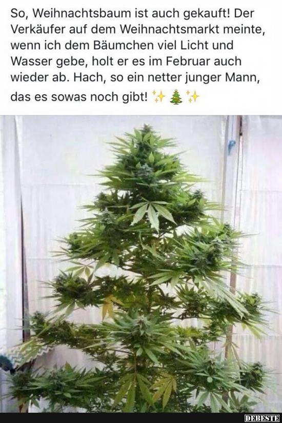 Lustige Tannenbaum Sprüche.So Weihnachtsbaum Ist Auch Gekauft Lustige Bilder Sprüche