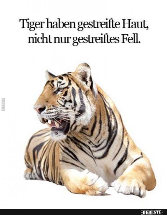 Tiger Haben Nicht Nur Ein Gestreiftes Fell Lustige Bilder