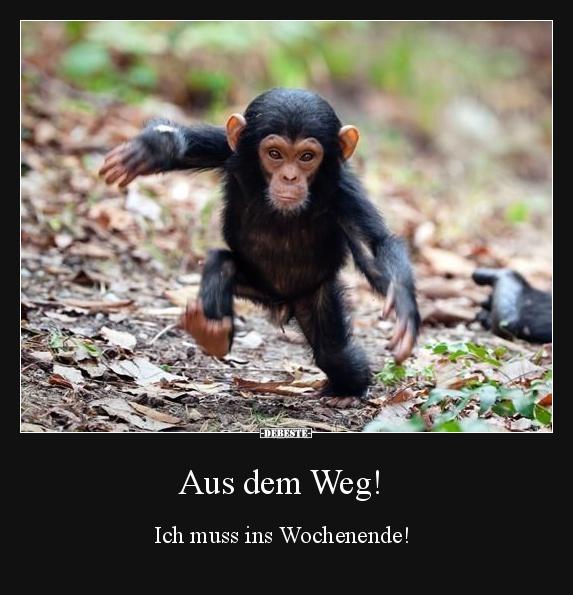 Aus dem Weg! Ich muss ins Wochenende! | Lustige Bilder ...