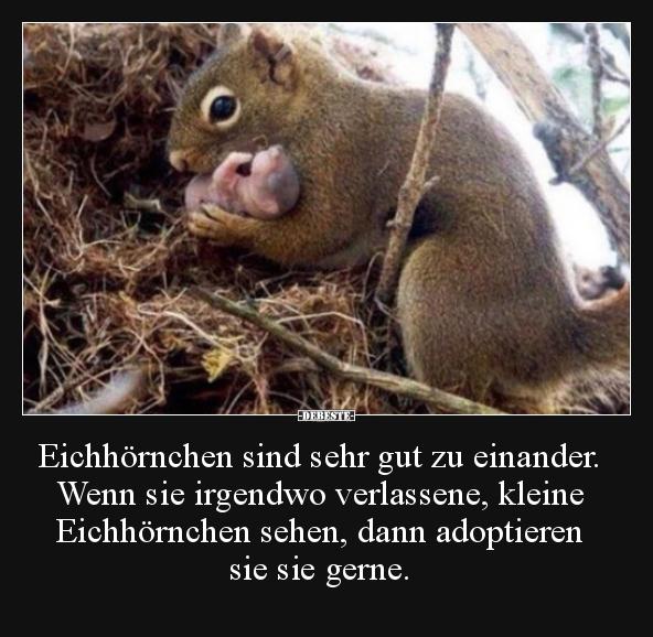 Eichhörnchen sind sehr gut zu einander. Wenn sie irgendwo
