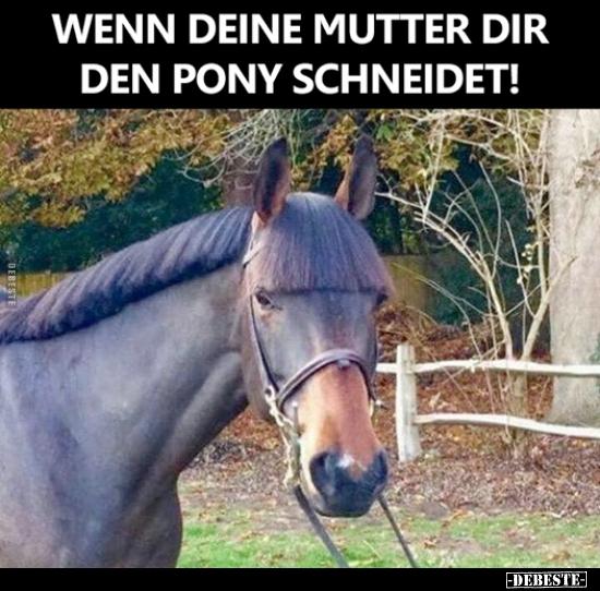 Pony Witze