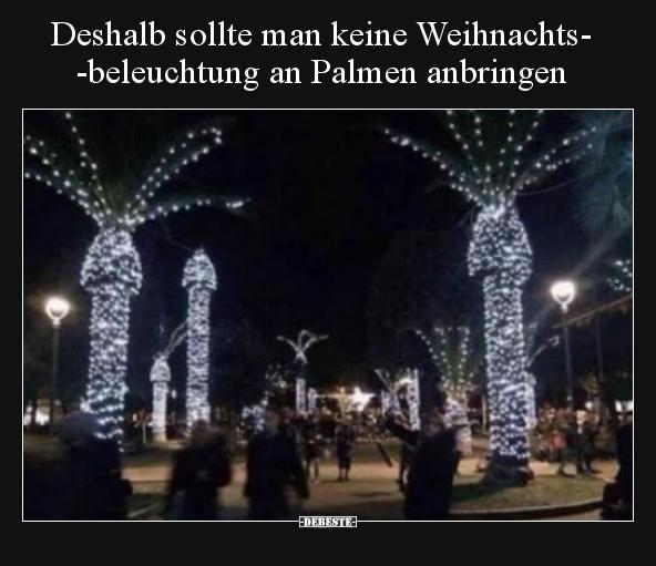 Deshalb sollte man keine Weihnachtsbeleuchtung an Palmen..   Lustige ...