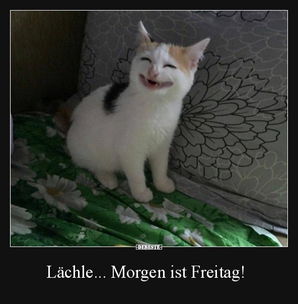 Lachle Morgen Ist Freitag Lustige Bilder Spruche Witze