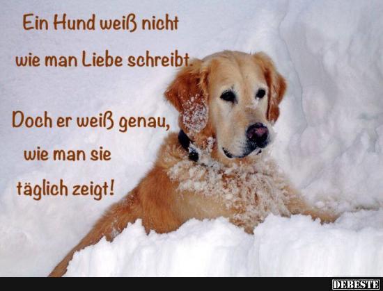 hund sprüche Ein Hund weiß nicht wie man Liebe schreibt.. | Lustige Bilder  hund sprüche