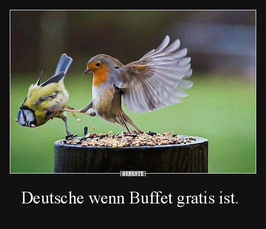 Deutsche wenn Buffet gratis ist.   Lustige Bilder, Sprüche ...