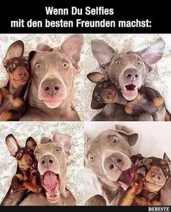 Wenn Du Selfies mit den besten Freunden machst.. | Lustige