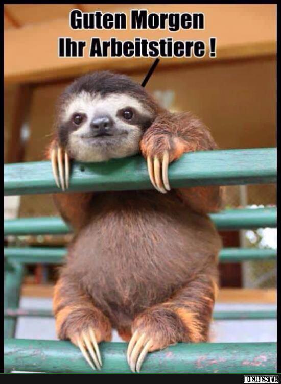 Guten Morgen Ihr Arbeitstiere Lustige Bilder Spruche Witze