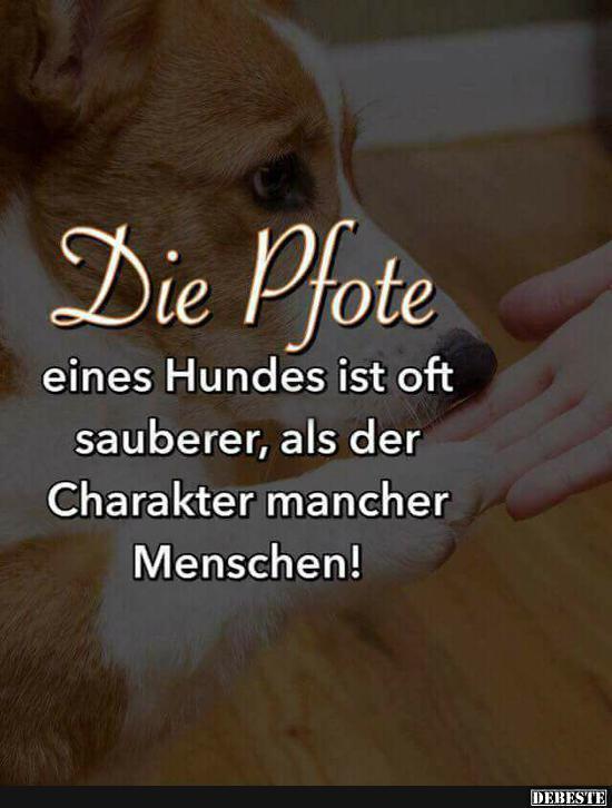 Charakter   DEBESTE.de, Lustige Bilder, lustig foto