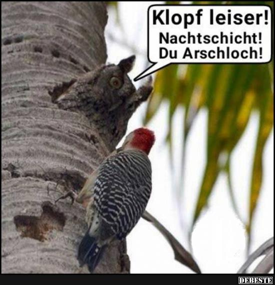 Klopf Leiser Lustige Bilder Spruche Witze Echt Lustig