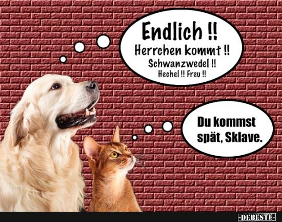 Hund vs. Katze, wenn ich nach Hause komme | Lustige Bilder