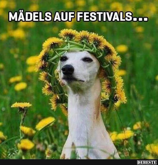Mädels Auf Festivals Lustige Bilder Sprüche Witze