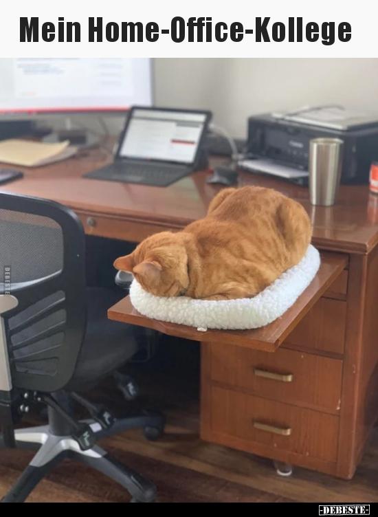 Mein Home-Office-Kollege.. | Lustige Bilder, Sprüche ...