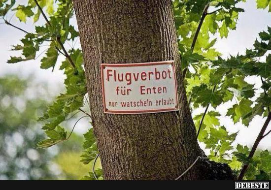 Flugverbot für Enten.. | Lustige Bilder, Sprüche, Witze, echt lustig