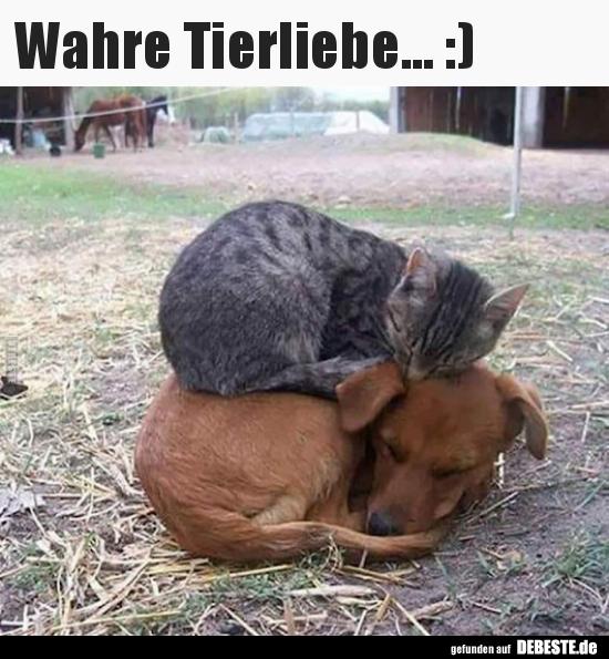 tierliebe sprüche Wahre Tierliebe :) | Lustige Bilder, Sprüche, Witze, echt lustig tierliebe sprüche