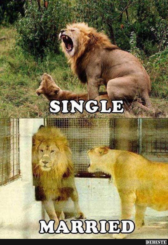 frauen single verheiratet geschieden single frauen luzern