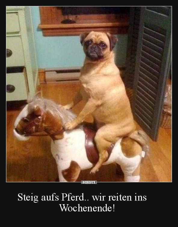 Steig Aufs Pferd Wir Reiten Ins Wochenende Lustige Bilder