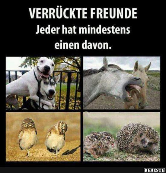 Verruckte Freunde Lustige Bilder Spruche Witze Echt Lustig