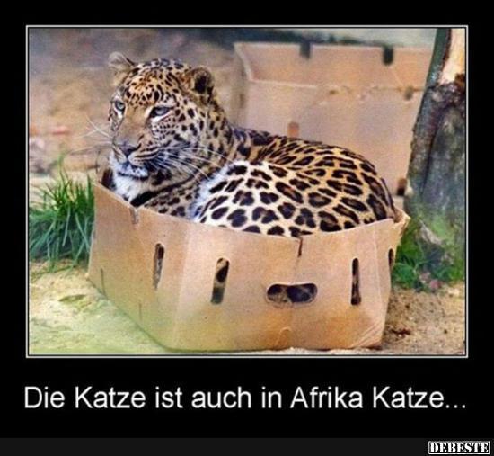 die katze ist auch in afrika katze lustige bilder spr che witze echt lustig. Black Bedroom Furniture Sets. Home Design Ideas