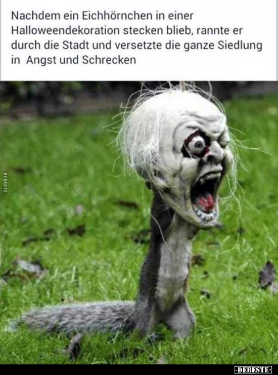 183 Lustige Bilder Von Halloween In 2020 Lustig