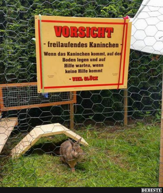 Vorsicht   freilaufendes Kaninchen.. | Lustige Bilder, Sprüche