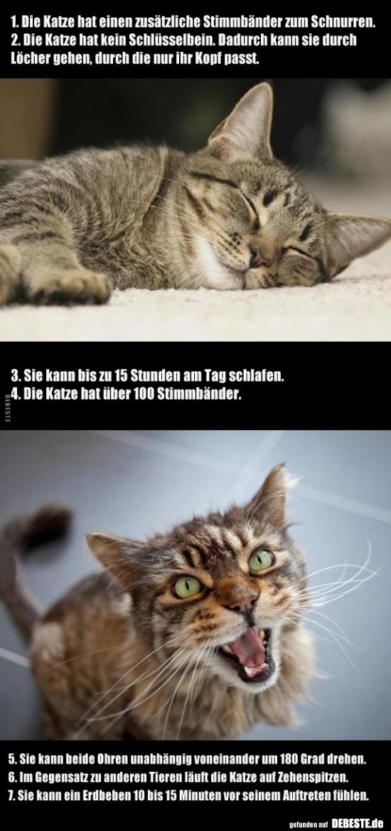 Die Katze hat einen zusätzliche Stimmbänder zum