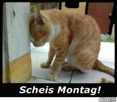 Scheiss Montag ! | Lustige Bilder, Sprüche, Witze, echt lustig