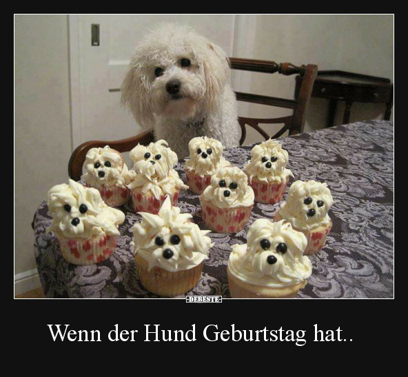 Wenn Der Hund Geburtstag Hat Lustige Bilder Spruche Witze