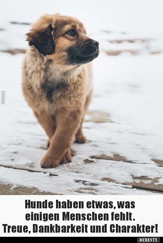 hunde haben etwas was einigen menschen fehlt  lustige