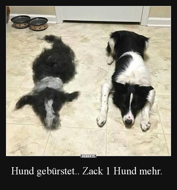 hund geb rstet zack 1 hund mehr lustige bilder spr che witze echt lustig. Black Bedroom Furniture Sets. Home Design Ideas