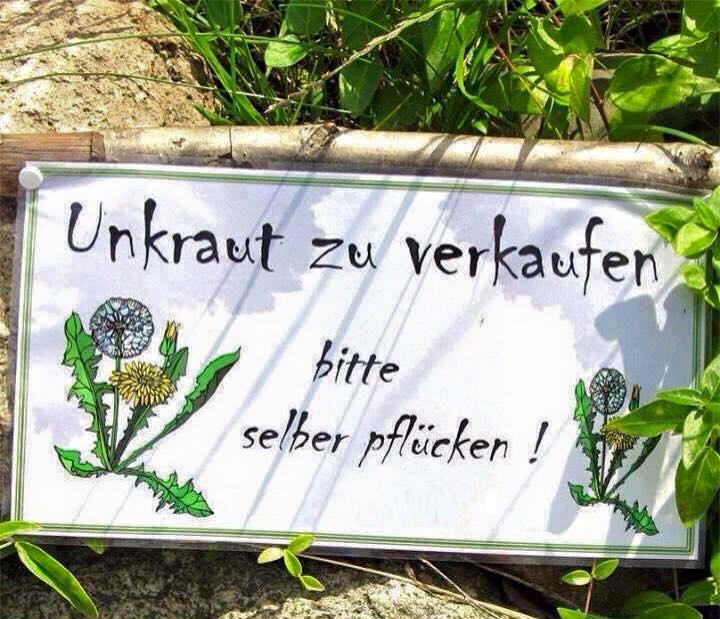 Unkraut Zu Verkaufen Lustige Bilder Spruche Witze Echt Lustig