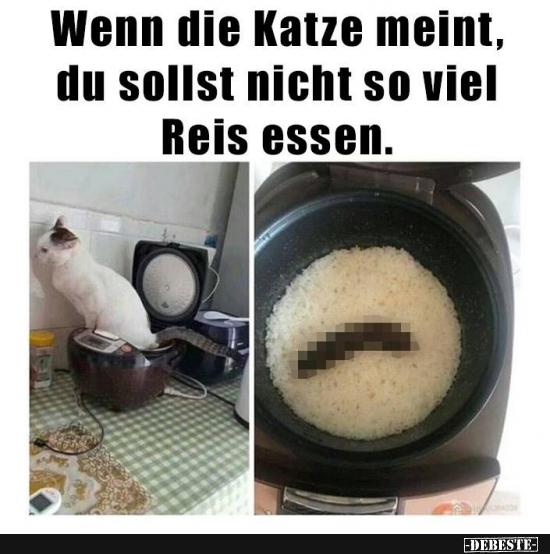 Wenn die Katze meint, du sollst nicht so viel Reis essen