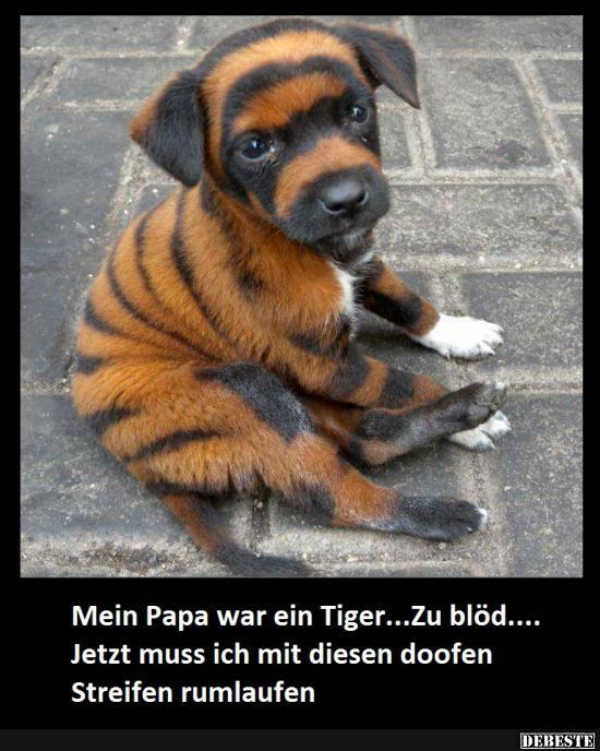 Mein Papa War Ein Tiger Lustige Bilder Sprüche Witze