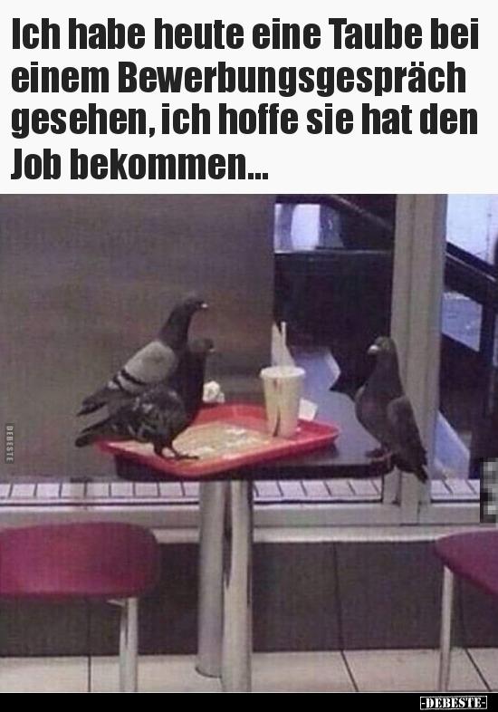 Ich Habe Heute Eine Taube Bei Einem Bewerbungsgespräch Lustige