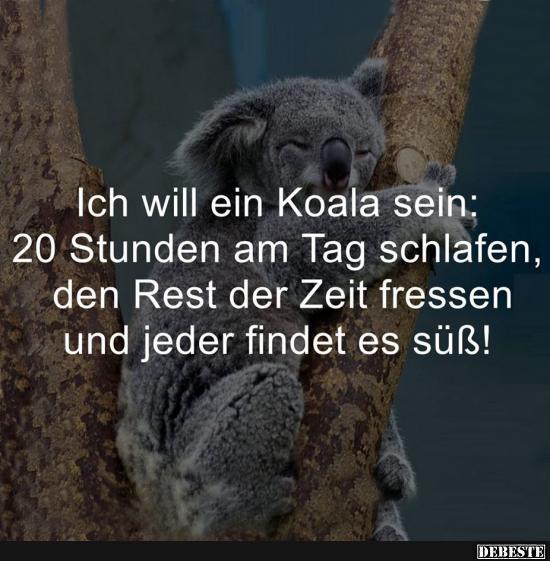 Ich Will Ein Koala Sein Lustige Bilder Spr Che Witze